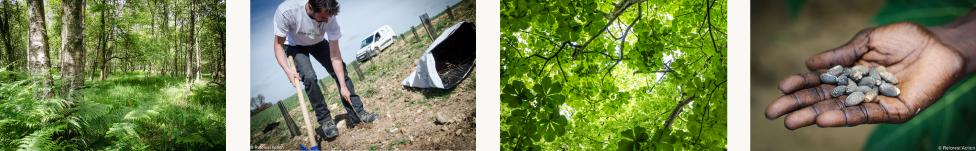projets-reforestation